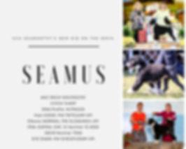 Seamus Health Flyer2.jpg