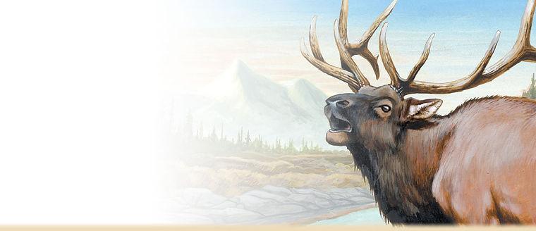 american-elk-head-painting.jpg