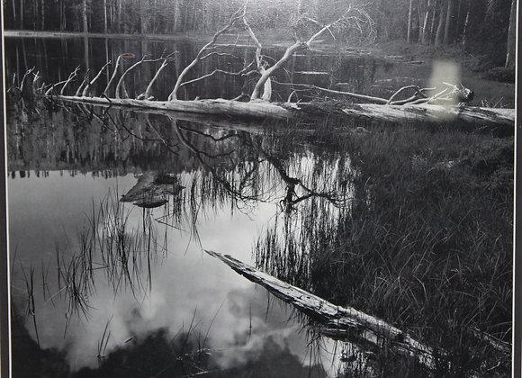 Peaceful Pond Yosemite B&W Picture