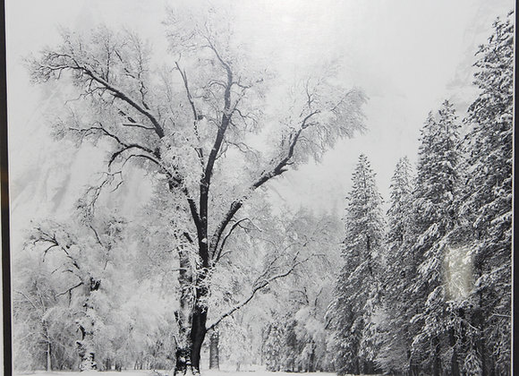 Winter in Yosemite B&W Picture