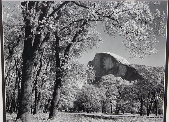 Yosemite's Half Dome B&W Picture