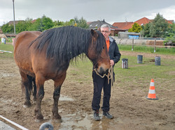 Přemluv koně 2.0