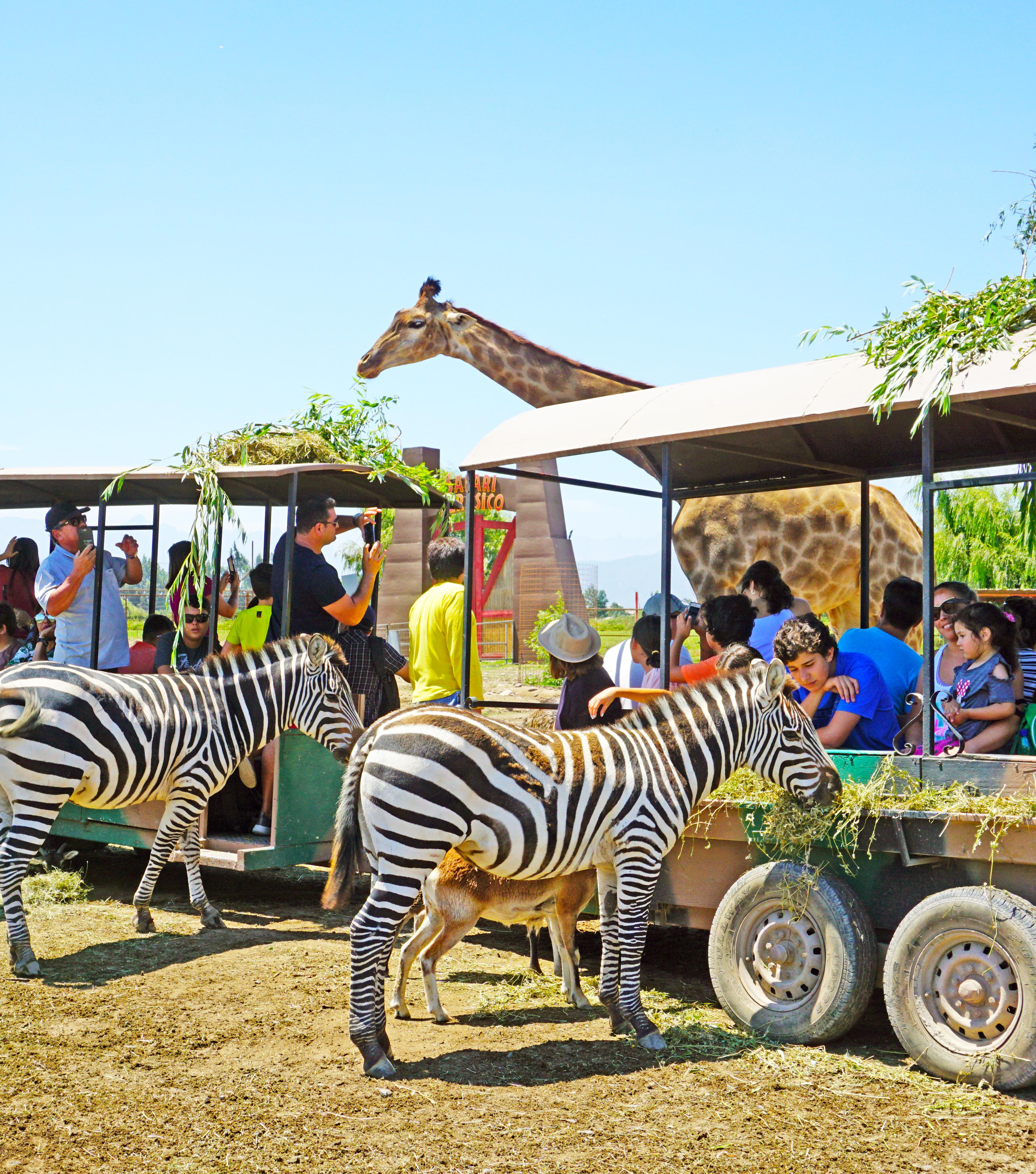 Safari Hebívoros