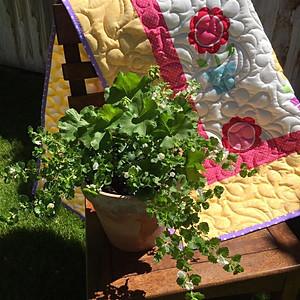 Pot O'Sunshine (sold)