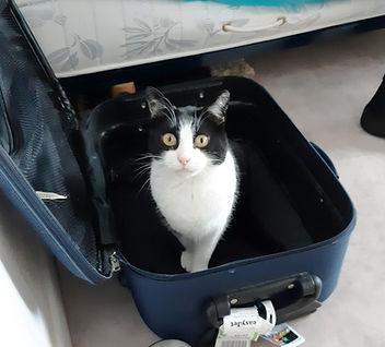Isia valise.jpg