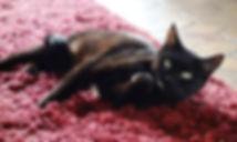 Salem sur le tapis.jpg