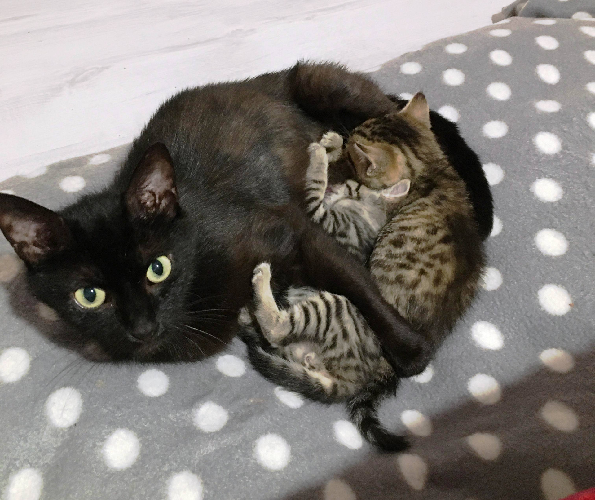 Lizzy et les chatons 27 mai.jpg