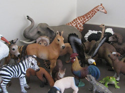 Animal challenge