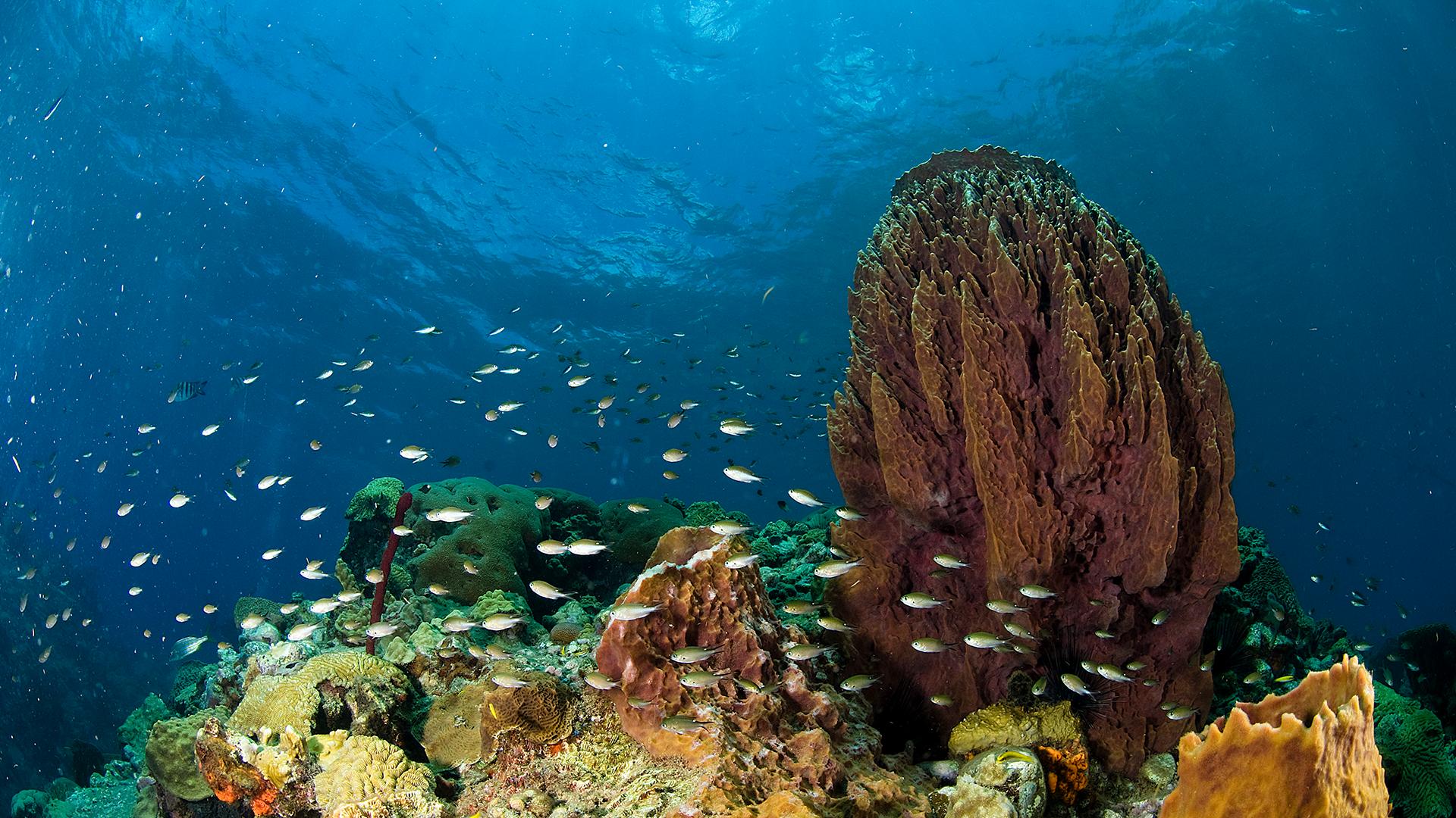 Trafalgar Falls & Champagne Reef