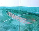the edge of the sea I & II