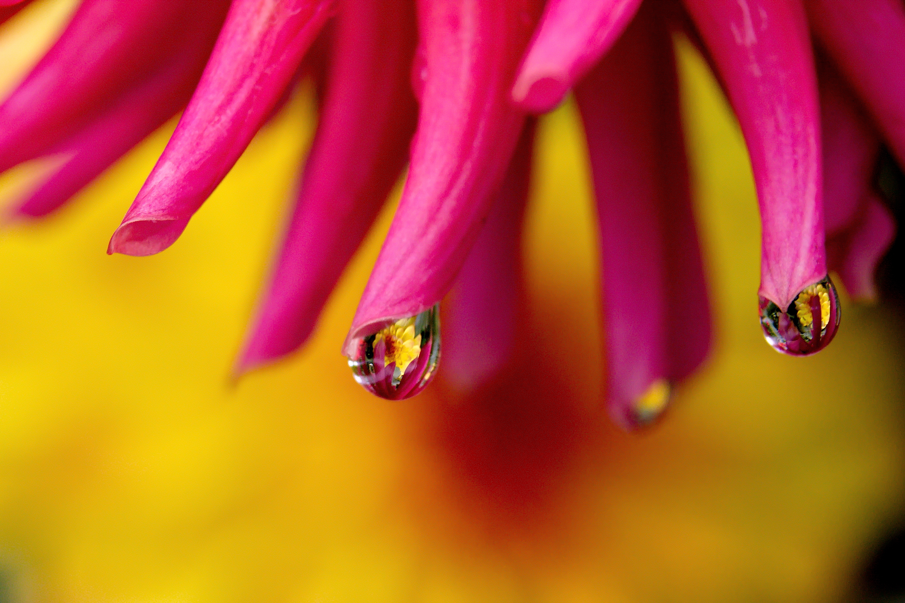 Water Drops on Flower
