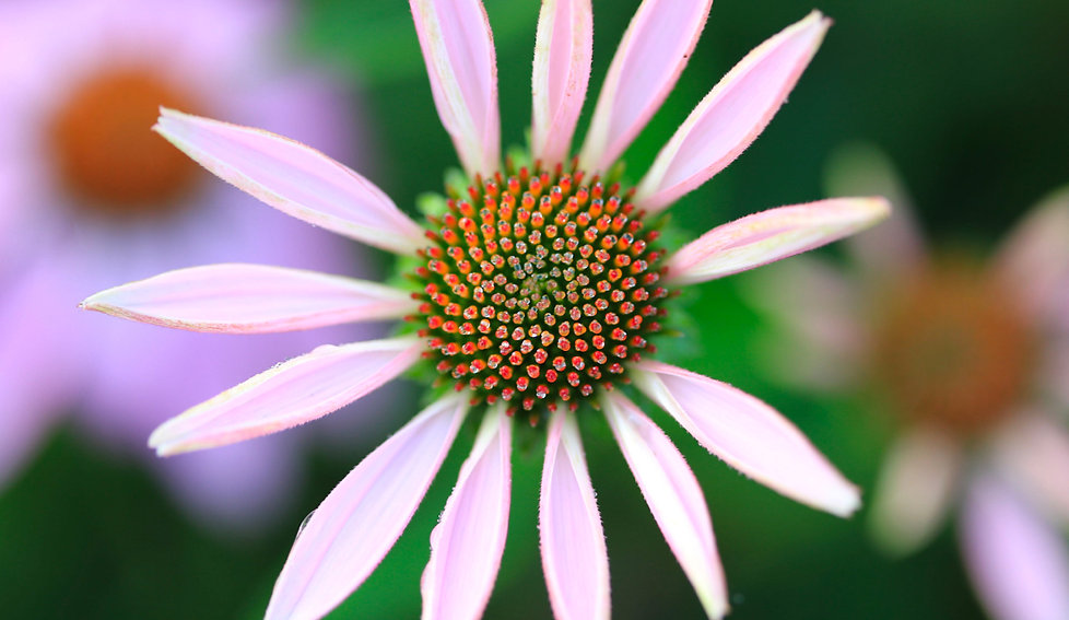 Gaia_Herbs.jpg