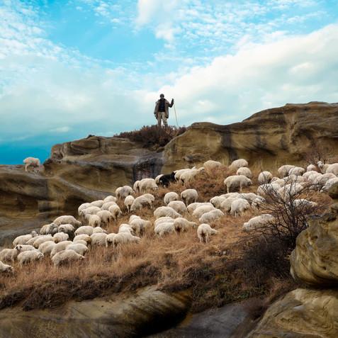 Shepherd in Georgia