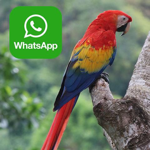 whatsapp macaw.jpg