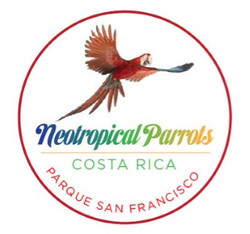 Neo Tropical Parrots Costa Rica