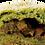 Thumbnail: 千歳ベーコンと ほうれん草のカレーパン【冷凍】6個入り