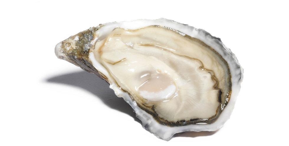 Gillardeau oester IV