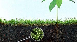 soil microbiome.jpg