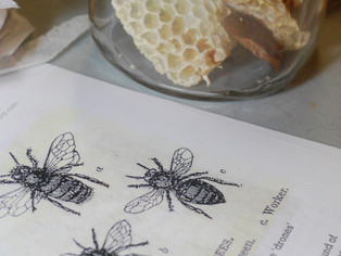 Bees & Honey, August 27