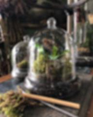 cloche terrarium.jfif
