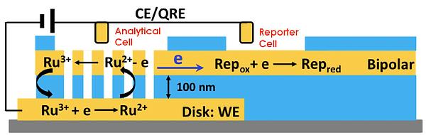 Electron-Optical1.png