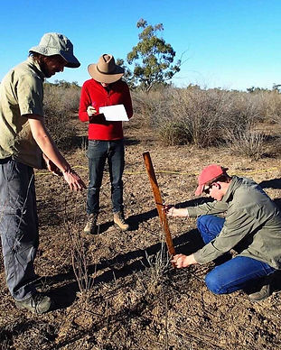 vegetation survey carnarvon.jpg