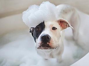 Dog-Bath-Games.jpg