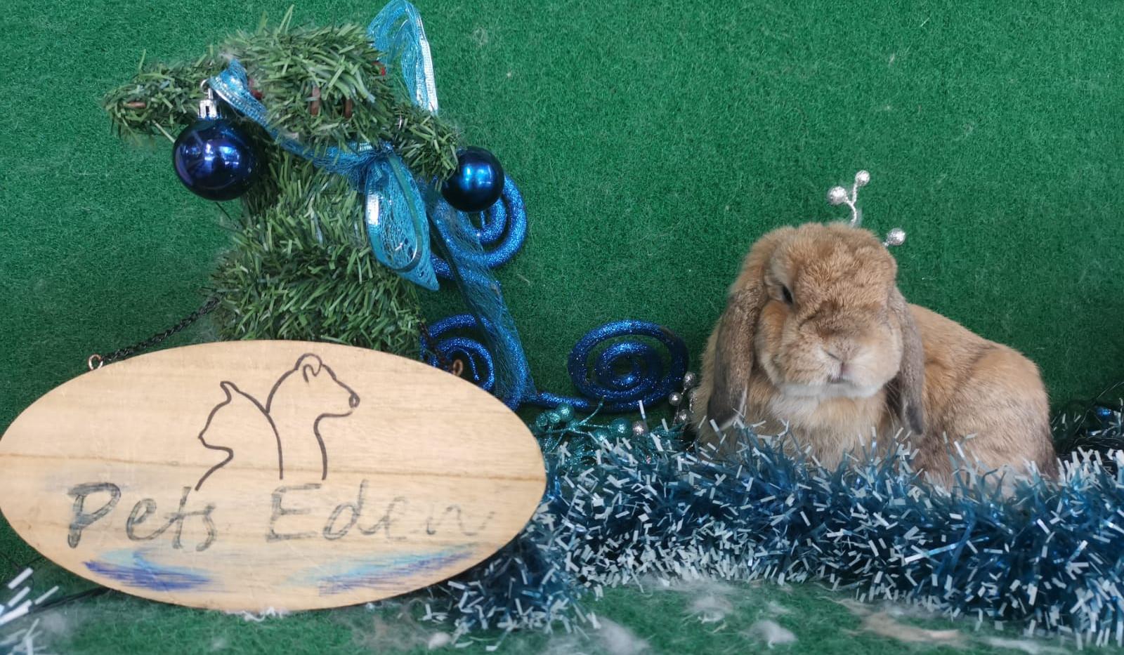Short Hair Rabbit, Basic Grooming $35