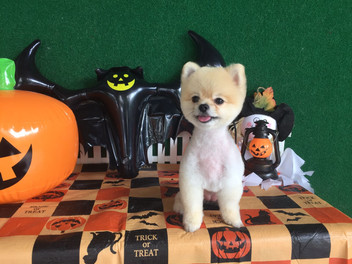 Pets Eden Doggy Halloween Compilation!
