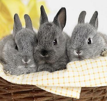 rabbit wallpaper 4.jpg