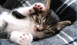 sleepy-cat1.jpg