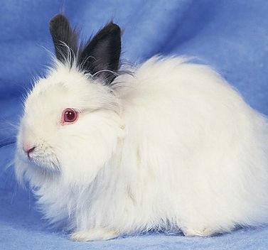 furry rabbit.jpg