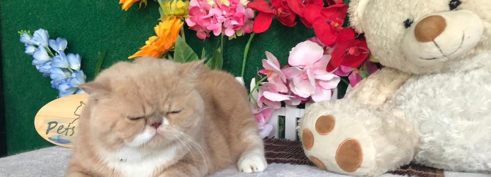 happy cat - with border.jpg