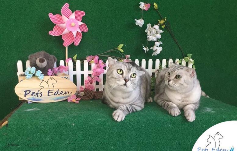 Short Hair Cat, Basic Grooming $60 each