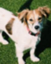 mixed breed dog.jpg
