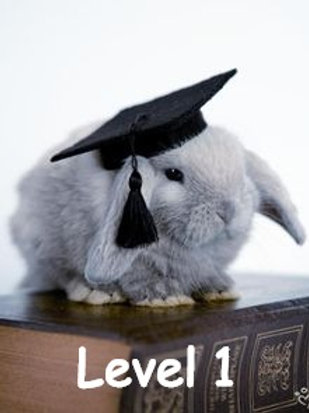 Rabbit Level 4 Course