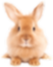 Easter-Rabbit-PNG-HD.png