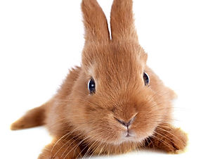 cute rabbit.jpg