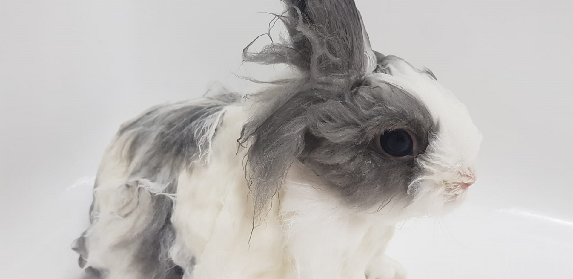 Long Hair Rabbit, Shower $30