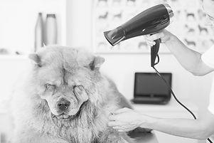Canine Hairdresser_edited.jpg