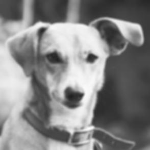 Dog Listening_edited.png