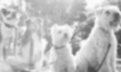 Dog Walker at the Park_edited.jpg