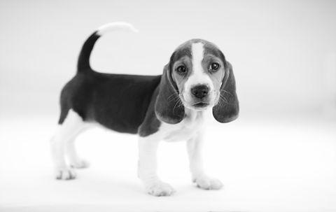 Cute Puppy_edited.jpg