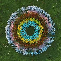 Soft Focus - Flowers (Artwork) 1400x1400