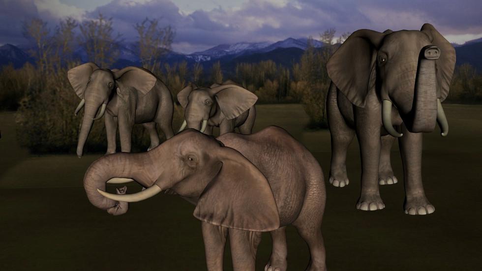 Parc d'éléphants