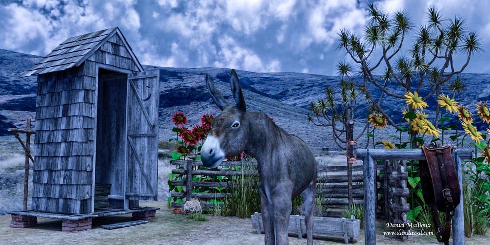 hot house donkey
