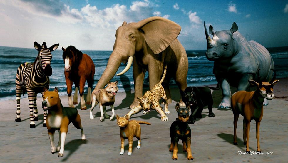 Beach zoo