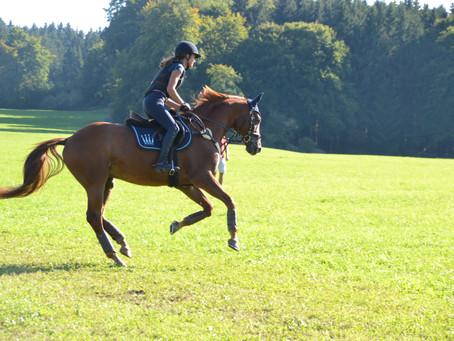Intervalltraining mit Pferd: Warum, wie oft, wie lange?