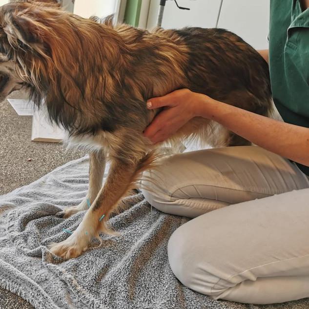 Physiotherapie und Akupunktur