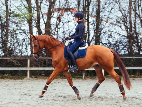 Die Bedeutung der Aufwärmphase des Pferdes